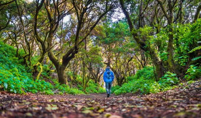 Lätt vandring på Teneriffa