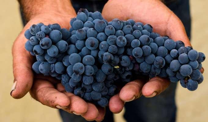 Georgia – vinens vugge