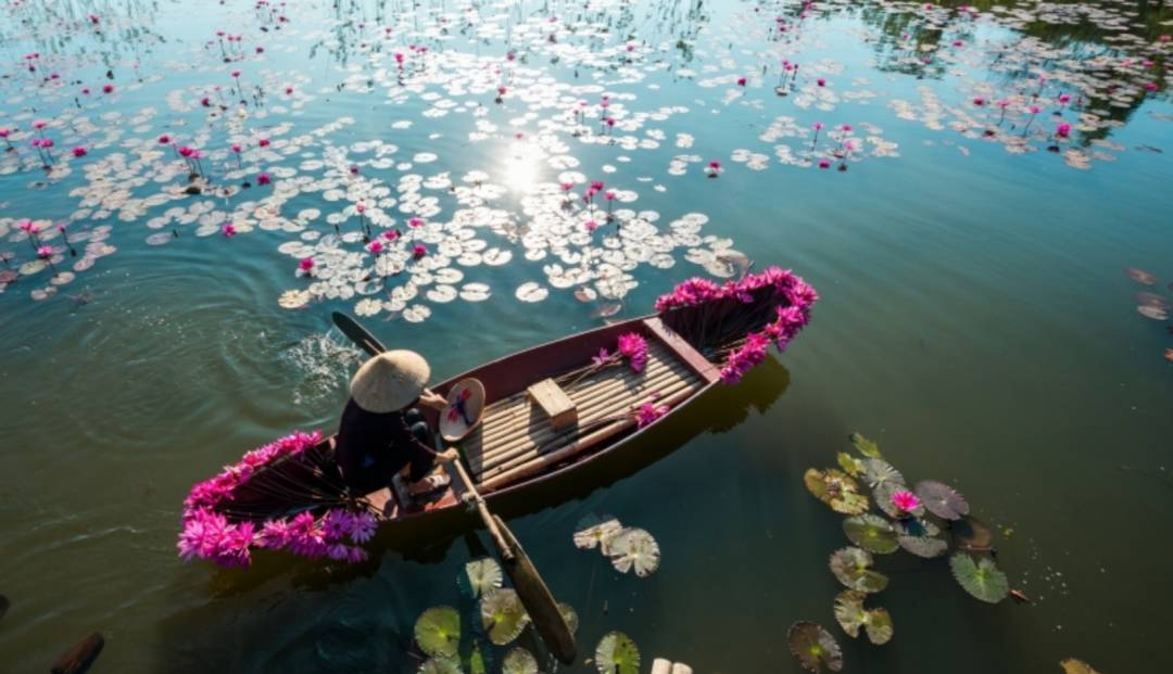 En blomsterselger plukker vannliljer i Vietnam