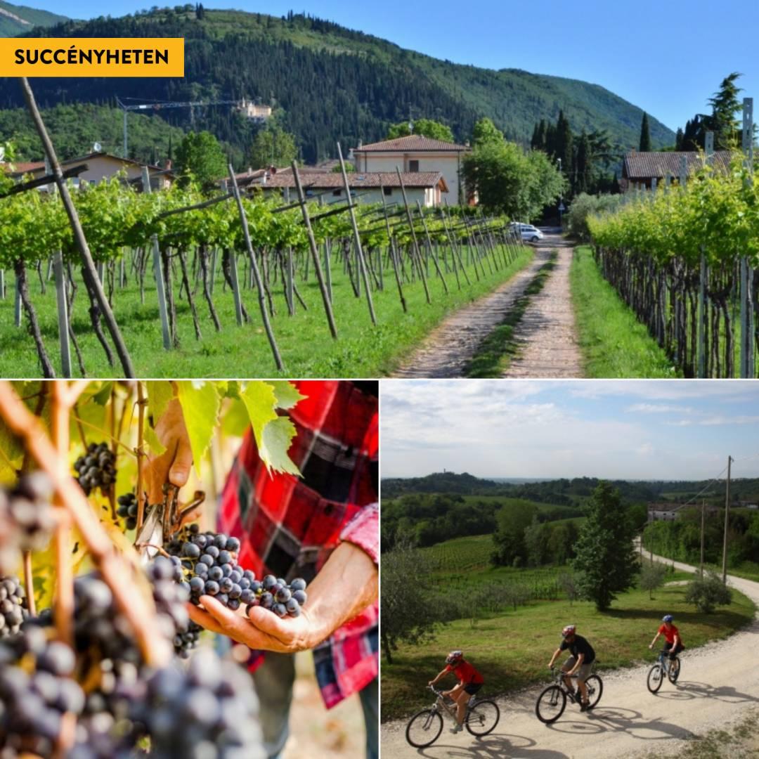 Cykla mellan italienska vingårdar