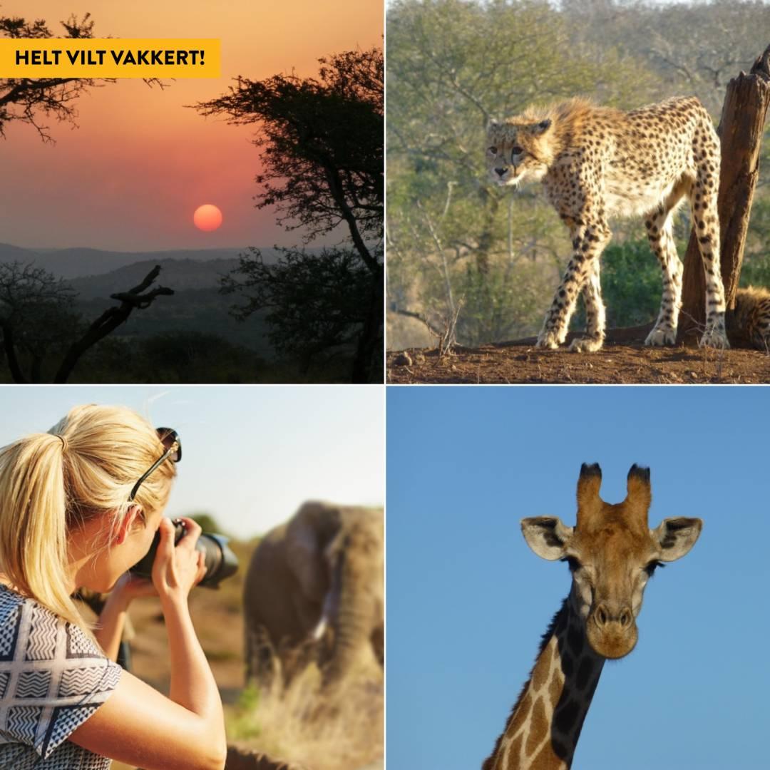 – Livet på safari er fantastisk